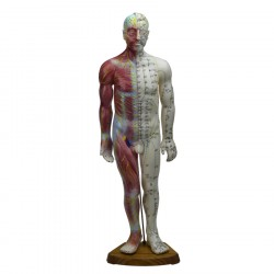 Male Acupuncture&Muscle Model 60 cm