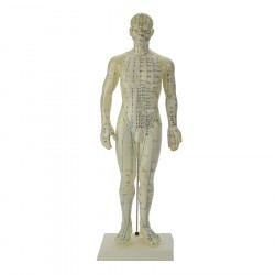 Male Acupuncture Model 50 cm