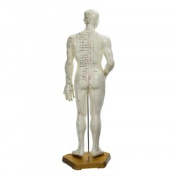 Male Acupuncture Model CMAM-1 65cm